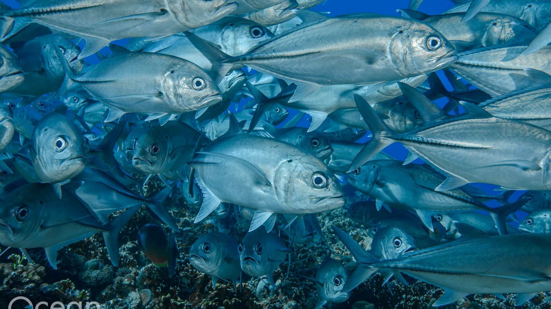 Solomon Islands Liveaboard Diving Trips | Bilikiki Cruises
