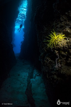 Best Dive Sites in the Solomon Islands - Leru Cut